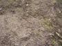 Grass0605241